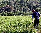 Conciliar a agricultura familiar com a conservação ambiental é um dos objetivos do Programa Mata Atlântica