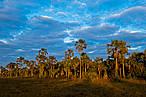 Frutos do Cerrado geram renda para comunidades locais<br />&copy;&nbsp;Bento Viana/WWF-Brasil&#8221; border=&#8221;0&#8243; align=&#8221;left&#8221; hspace=&#8221;4&#8243; vspace=&#8221;2&#8243; /></a><em>Em manifesto, 40 organiza&#231;&#245;es ambientais convocam os setores da soja e carne a impedir a destrui&#231;&#227;o de mais de 30% do bioma que abriga as nascentes de 8 das 12 regi&#245;es hidrogr&#225;ficas brasileiras</em><br />&nbsp;<br />Entre 2013 e 2015 o Brasil destruiu 18.962 km&#178; de Cerrado. Isso significa que, a cada dois meses, o equivalente &#224; &#225;rea da cidade de S&#227;o Paulo &#233; destru&#237;da no bioma. Esse ritmo de destrui&#231;&#227;o torna o Cerrado um dos ecossistemas mais amea&#231;ados do planeta. Hoje, 11 de setembro, quando &#233; celebrado o Dia do Cerrado, organiza&#231;&#245;es ambientalistas se uniram e lan&#231;am o manifesto: <em>Nas m&#227;os do mercado, o futuro do cerrado: &#233; preciso interromper o desmatamento</em>. <ul> <li><strong><a href=