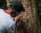 Iniciativa Protegendo Florestas possibilitou a proteção de 1 bilhão de árvores