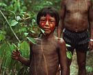 Indígenas Kayapó com planta medicinal