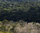 Após subir a serra, cenário inesquecível: um tapete de floresta densa que se perde no horizonte.