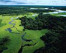 Florestas ajudam a manter o clima, a água e ainda provêm alimentos e medicamentos.