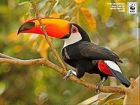 / ©: WWF-Brasil / A. Cambone, R. Isotti - Homo ambiens