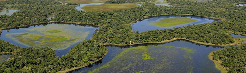 vista aérea Pantanal / ©: WWF-Brasil/Adriano Gambarini