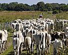 A pecuária é uma das principais atividades econômicas no Pantanal e tem forte presença também no Cerrado. Por isso, é importante estimular práticas produtivas  que gerem menor impacto nos recursos naturais e na biodiversidade dessa região.