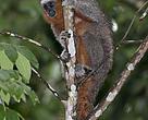 Expedição possibilitou o registro fotográfico e audiosivual da nova espécie