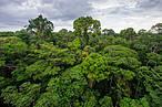 A partir de um novo olhar, que une criatividade e expertise em t&#233;cnicas de manejo florestal a uma perspectiva empreendedora, se espera ampliar e acelerar a recupera&#231;&#227;o dos biomas brasileiros.  <br />&copy;&nbsp;&#169;Salparadis/Shutterstock.com&#8221; border=&#8221;0&#8243; align=&#8221;left&#8221; hspace=&#8221;4&#8243; vspace=&#8221;2&#8243; /></a>Inovar &#233; fazer algo novo. As iniciativas selecionadas pelo Desafio Ambiental criaram diferentes formas de apoiar o Brasil a atingir a meta de restaura&#231;&#227;o de &#225;reas degradadas. A partir de um novo olhar, que une criatividade e expertise em t&#233;cnicas de manejo florestal a uma perspectiva empreendedora, se espera ampliar e acelerar a recupera&#231;&#227;o dos biomas brasileiros.&nbsp;<br />&nbsp;<br />&#8220;Recebemos propostas de diversos estados, de universidades, centros de pesquisa, ONGs, governo do estado, empresa privada, pessoas f&#237;sicas, produtores rurais, povos ind&#237;genas, etc. E para mim, a ideia de apoiar e dar visibilidade &#224;s atividades que promovem a restaura&#231;&#227;o florestal &#233; a melhor parte desse Desafio. Conseguimos 132 propostas que envolveram a sustentabilidade ambiental e cerca de 100 propostas que de fato promoveram a restaura&#231;&#227;o, de pequena &#224; larga escala&#8221;, comemora Leda Tavares, especialista do WWF-Brasil.<br />&nbsp;<br />As iniciativas selecionadas surpreendem ao propor novas solu&#231;&#245;es para antigos problemas, utilizando-se de tecnologia, criatividade, conhecimentos de mercado, ou ainda resgatando conhecimentos ancestrais sob uma perspectiva contempor&#226;nea. Do dia 6 ao dia 21 de setembro estar&#225; aberto o j&#250;ri popular, uma das modalidades da premia&#231;&#227;o. Vote na sua preferida em www.desafioambiental.org.<br />&nbsp;<br />Conhe&#231;a um pouco mais sobre as iniciativas:<br />&nbsp;<br /><strong>Projeto &#8220;Nucle&#225;rio&#8221;, da Fractal &#8211; n&#250;cleo de inova&#231;&#245;es (Rio de