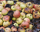 """According to Edegar Rosa, coordinator of WWF-Brasil's Agriculture and Food Programme, """"food waste is a major environmental problem. It is estimated that 3.3 billion tonnes of equivalent CO2 that are warming our planet are associated with food loss and waste""""."""