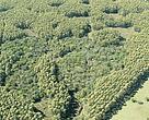 Mosaico de plantações florestais de acácia-negra integrada com florestas nativas de Mata Atlântica