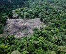 Amazon deforestation in Acre