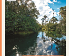Áreas Prioritárias para conservação da biodiversidade no Cerrado e Pantanal