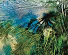 Publicação traz os resultados do consumo de água das atividades econômicas mais relevantes nas regiões das sete bacias hidrográficas onde o Programa atua com projetos de conservação