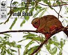 Revista Panda Brasil - Edição 08