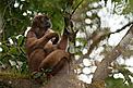 / ©: WWF-Brasil/Adriano Gambarini