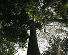 A certificação florestal garante que a madeira utilizada em determinado produto é oriunda de um processo produtivo ecologicamente adequado e economicamente viável.