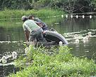 Pesca do pirarucu no município de Feijó