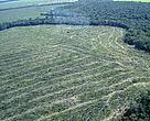 Desmatamento volta com força à Amazônia, na expectativa de anistia com reforma do Código Florestal