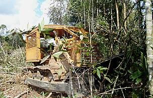 Maquinário pesado avança sobre a floresta tropical