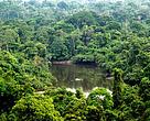 Floresta da Esec Terra do Meio, no Pará.