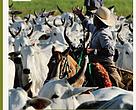 Estudo de caso sobre os projetos de boas práticas pecuárias no Cerrado e Pantanal