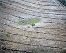 La deforestación es una de las grandes amenazas a las nacientes y ríos del Pantanal