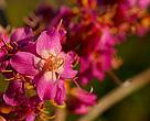 Espécie de flor do Cerrado, Parque Nacional Juruena