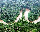O manejo florestal contribui para a conservação dos ecossistemas na Amazônia