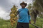 Enquanto mais de 100 milh&#245;es de hectares da cobertura vegetal do Cerrado (o mesmo que toda a &#225;rea da Europa ocidental) j&#225; foram perdidos para o agroneg&#243;cio, os povos do Cerrado coletam esp&#233;cies nativas para se alimentar, e comercializar, complementando sua renda com a pr&#225;tica do extrativismo sustent&#225;vel<br />&copy;&nbsp;Andr&#233; Dib/WWF-Brasil&#8221; border=&#8221;0&#8243; align=&#8221;left&#8221; hspace=&#8221;4&#8243; vspace=&#8221;2&#8243; /></a>O lan&#231;amento da exposi&#231;&#227;o &#8220;Cen&#225;rios e Riquezas do Cerrado de Guimar&#227;es Rosa&#8221;, organizado pelo WWF-Brasil e o Parque Nacional Cavernas do Perua&#231;u, acontecer&#225; no audit&#243;rio da Livraria Cultura do CasaPark, no dia 11 de setembro, &#224;s 11h, com a presen&#231;a do Minist&#233;rio do Meio Ambiente, o Instituto Chico Mendes de Conserva&#231;&#227;o da Biodiversidade (ICMBio), lideran&#231;as agroextrativistas e representantes de organiza&#231;&#245;es ambientais.</p> <p>Fazem parte da programa&#231;&#227;o, ainda, um debate sobre as riquezas socioambientais e a crescente devasta&#231;&#227;o desse rico bioma, a apresenta&#231;&#227;o da campanha de reconhecimento do Parque Nacional Cavernas do Perua&#231;u como Patrim&#244;nio Mundial da Humanidade, a exibi&#231;&#227;o de um v&#237;deo com foco no extrativismo sustent&#225;vel do Cerrado e a apresenta&#231;&#227;o do Projeto &#8220;Como Pode um Peixe Vivo&#8221; do Instituto Bras&#237;lia Ambiental (IBRAM-DF). Para encerrar as atividades comemorativas &#224; data, um brunch com salada de guariroba, arroz com pequi, risoto de baru, entre outros pratos e petiscos &#224; base de produtos t&#237;picos do Cerrado.</p> <p>A exibi&#231;&#227;o tem 15 fotos que mostram a flora, a fauna e as peculiaridades do Cerrado numa forma de apresentar ao visitante a riqueza do bioma e chamar aten&#231;&#227;o para necessidade de um modelo de produ&#231;&#227;o mais sustent&#225;vel, que promova o desenvolvi