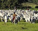Organic Cattle ranching