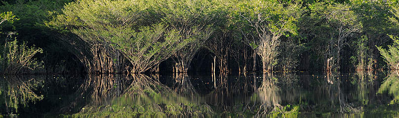 / ©: WWF-Brasil/ Zig Koch