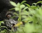 Perda da biodiversidade global é de 52% nos últimos 40 anos