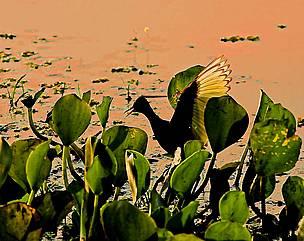 Área inundada do Pantanal, Brasil.