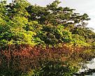 Novas UCs protegem rios e espécies ameaçadas de extinção.
