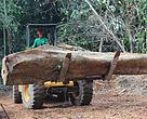 Em Rio Branco, a Cooperativa Central de Comercialização Extrativista do Acre (Cooperacre) realiza o manejo sustentável da madeira