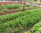 Na Escola Municipal Darthesy Novaes Caminha as atividades na horta utilizam os alimentos na merenda escolar