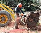 Corte da madeira, como parte das atividades de manejo florestal, realizada por operários da Cooperfloresta, no estado do Acre.