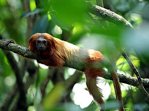 / ©: WWF-Brasil / Marco Sarti