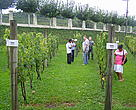 Extrativists from Acre visiting wine producers in Bento Gonçalves, Rio Grande do Sul State