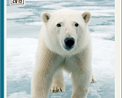 Uma em cada seis espécies está em perigo de extinção