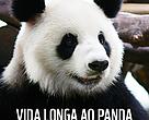 As atividades no Brasil começaram em 30/08/96