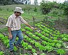 Irineu Wiggers Warmeling, é um exemplo de produtor rural catarinense em dia com as leis ambientais