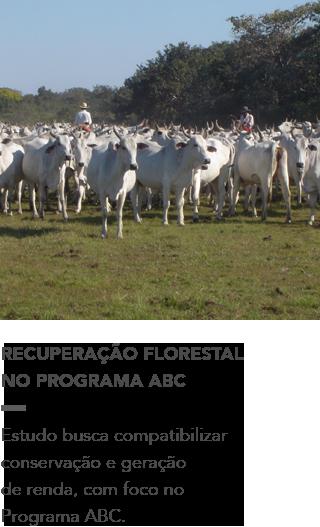 https://www.wwf.org.br/?58102/Programa-gua-Brasil-lana-estudo-de-recuperao-florestal-com-foco-no-Programa-ABC