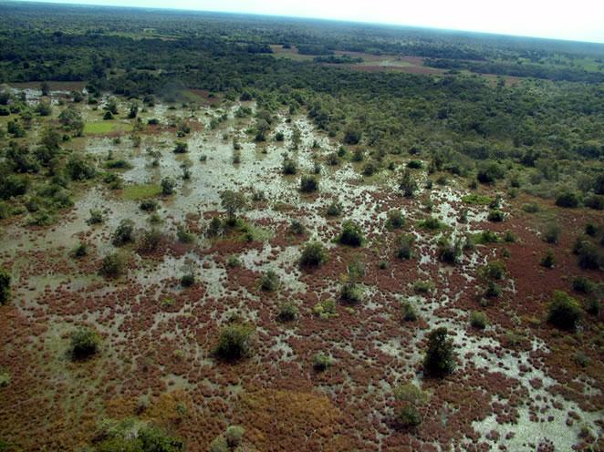 Invasão de pombeiro (Combretum spp.) na região de Poconé (MT).