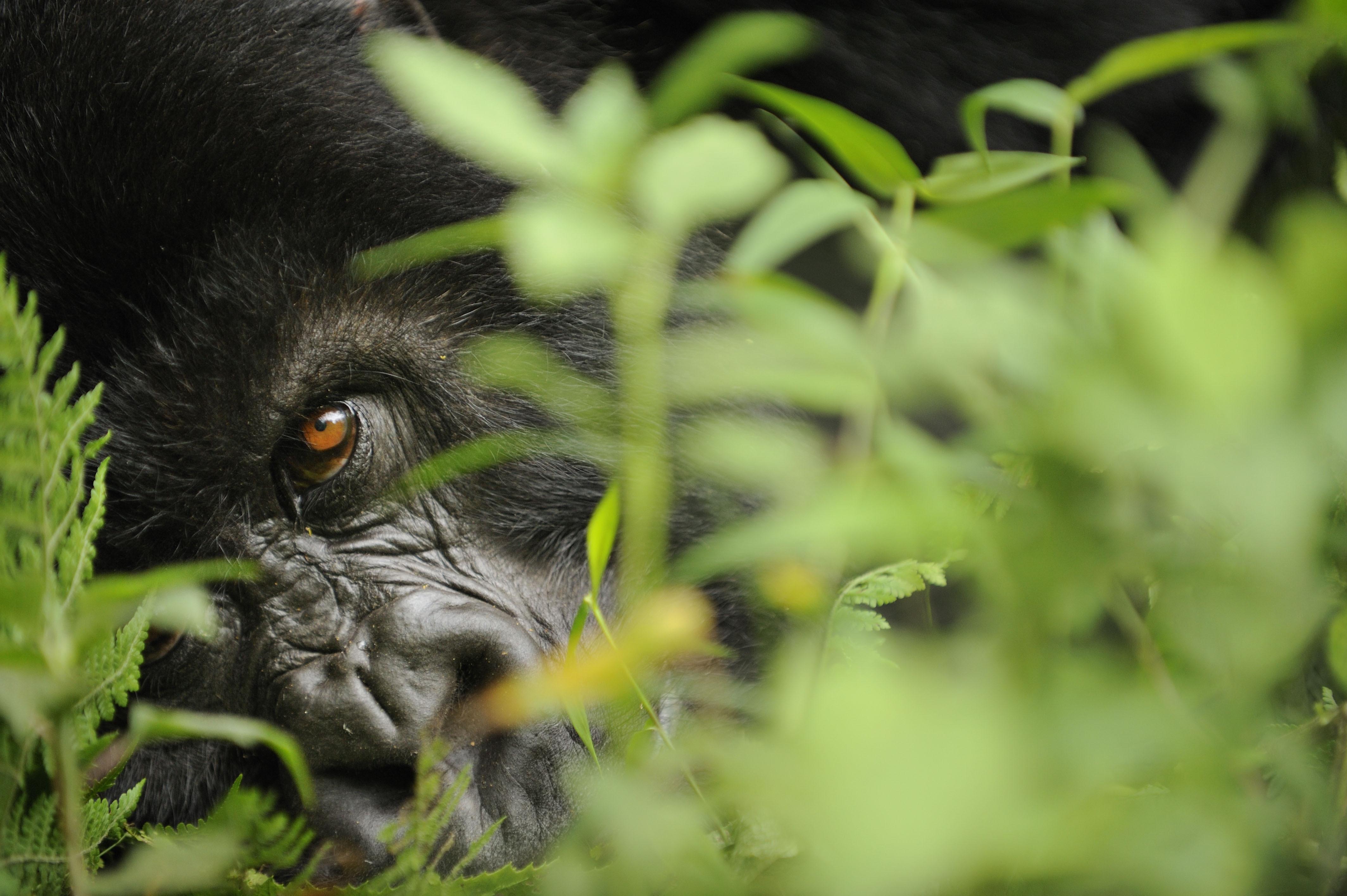 A biodiversidade no mundo todo está diminuindo !