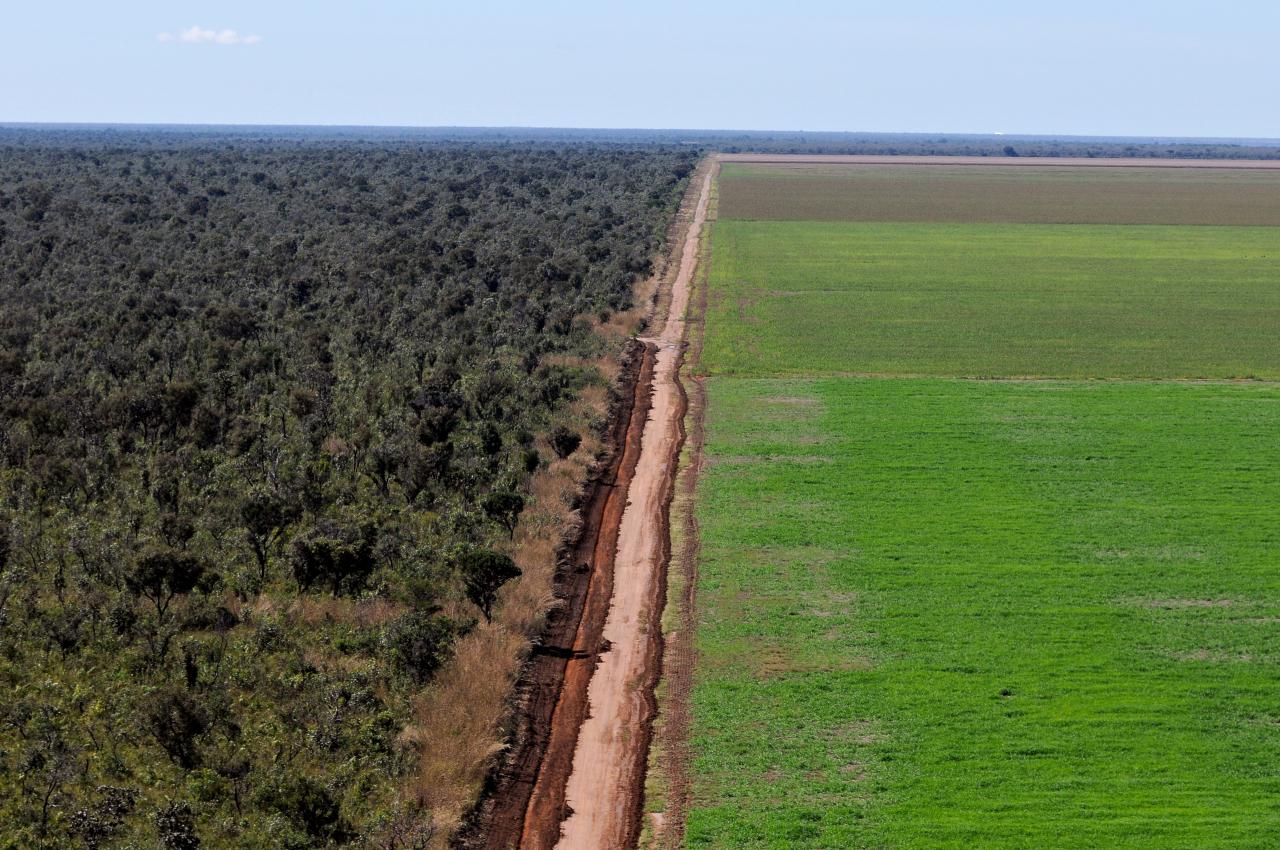 A expans o da soja wwf brasil - Fotos terras ...