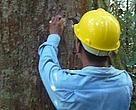 Venda do óleo de copaíba é parte de uma estratégia mais ampla, de estimular o manejo florestal, o reflorestamento, o extrativismo e os sistemas agroflorestais no Sul do Amazonas