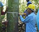 Durante o curso, participantes aprenderam a fazer o manejo florestal de pequena escala