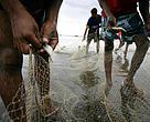 Pescadores retiram peixes de rede de pesca