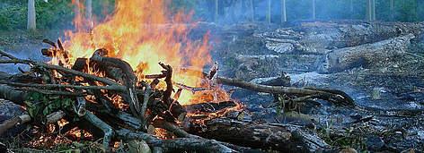 Madeira queimando. Amazonas, Brasil. / ©: WWF-Brasil