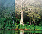 Efetividade de Gestão das Unidades de Conservação no Estado do Amapá.